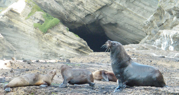 cape-bridgewater-seal-colony
